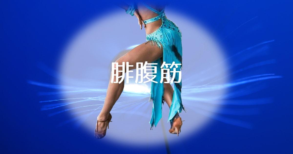 社交ダンス|腓腹筋|ふくらはぎ|筋肉|起始|停止